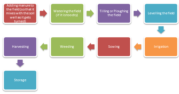 Step-by-step Agricultural Process