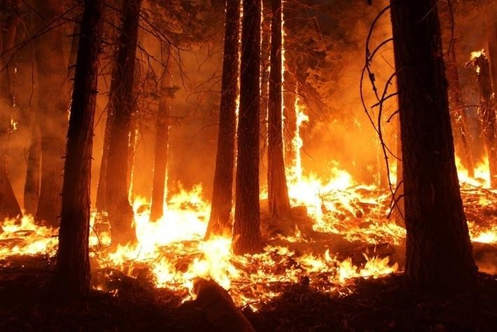 Forest fires and severe droughts also lead to deforestation.