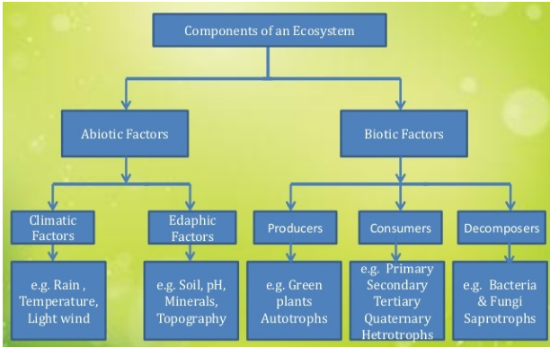 Components of ecosystem