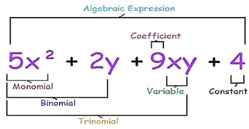 Monomials, Binomials and Polynomials