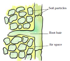 Figure 14 Roots can absorb air from the soil