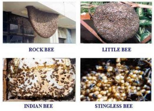 Honey Bee examples