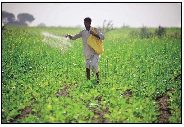 Using fertilizers in fields