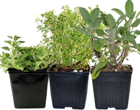 Common herb examples