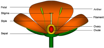 The structure of a flower