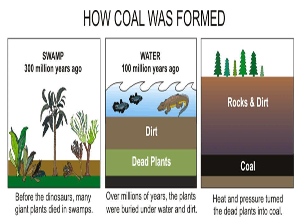 Figure 3 Formation of Coal