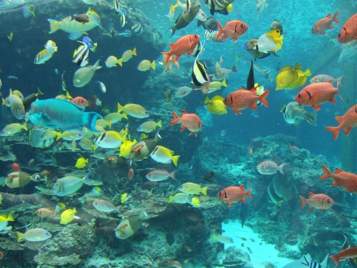 Figure 2 Aquatic Organisms
