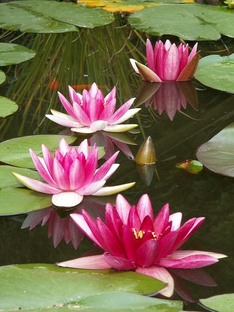 Figure 4 An aquatic plant