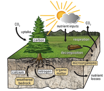 Recycling of Nutrients in Forests