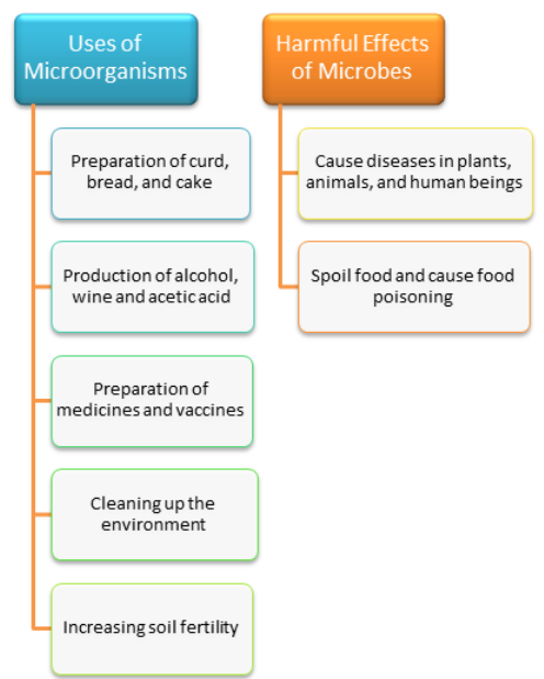 Microorganisms and Us