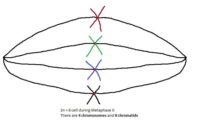 554-316_chromosome9.png