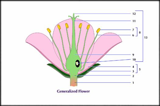 536-1492_generalized_flower.jpg