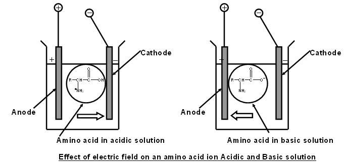 1665_isoelectric effect.JPG