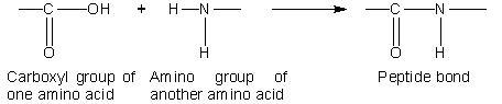 21_peptide linkage.JPG