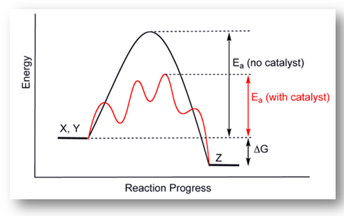A catalyst increases the rate of a reaction by providing a pathway whose activation energy is lower than the activation energy of the uncatalysed reaction.