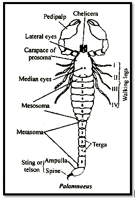 Palamnaeus