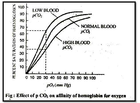 Effect of pCO2 on affinity of hemoglobin for oxygen