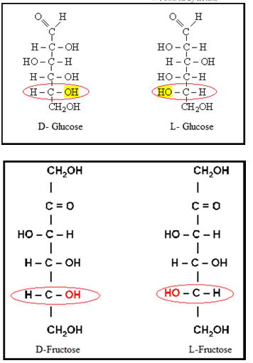 D- & L-isomers