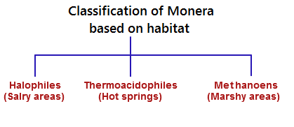 methanobacterium are methane producing archaebacteria biology essay Any of a group of archaebacteria that occur in diverse anaerobic environments and are capable of producing methane from a limited number of chemical sources, as carbon dioxide and hydrogen.