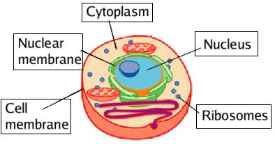 2014624 123310328 8998 cytoplasm