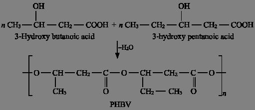 PHBV Polymer