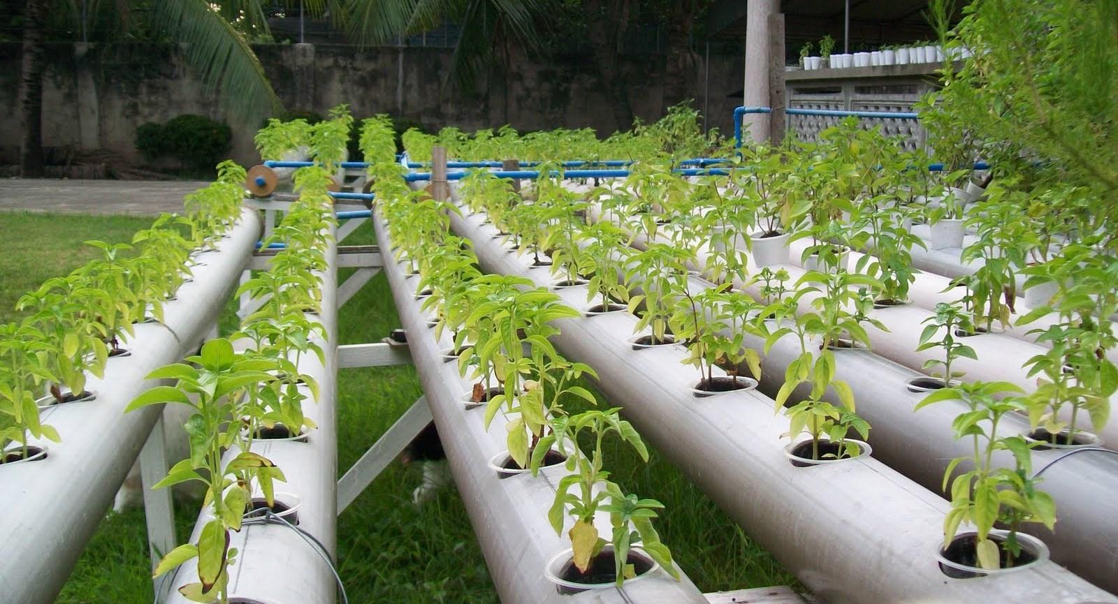 Organic Hydroponics in Real Life