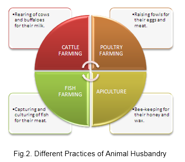 Different Practices of Animal Husbandry